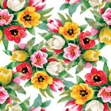 Seamless pattern with watercolor tulips Stock Photography