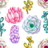 A seamless pattern with the watercolor various kinds of succulents. Hand-drawn on a white background Stock Photography