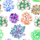 A seamless pattern with the watercolor various kinds of succulents Stock Images