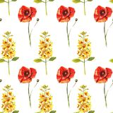 Seamless pattern with watercolour hand painted poppies and eremurus royalty free illustration