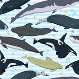 Seamless pattern with whales, modern texture with marine mammals, finback, spermwhale, bowhead, orca, pilot whale, right whale. Seamless pattern with whales Royalty Free Stock Photos