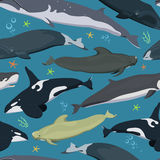 Seamless pattern with whales, modern texture with marine mammals, finback, spermwhale, bowhead, orca, pilot whale, right whale. Seamless pattern with whales Stock Photo