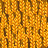 Seamless pattern with wheat. Agricultural image natural golden ears of barley or rye. Royalty Free Stock Images