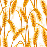 Seamless pattern with wheat. Agricultural image natural golden ears of barley or rye. Stock Image