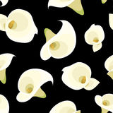 Seamless pattern with white calla lilies on black. Stock Photography