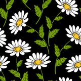 Seamless pattern with daisy flowers. Seamless pattern with white daisies on black background. Vector illustration Royalty Free Stock Photo