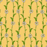 Seamless pattern of white daisies on green stems. Pattern and background are separated Stock Image