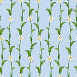 Seamless pattern of white daisies on green stems in the style of Provence. Pattern and background are separated Stock Images