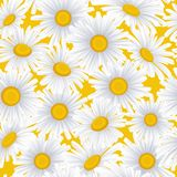 Seamless pattern with white daisies. Realistic Chamomile. Vector illustration Stock Images