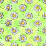 Seamless pattern of white daisy  Royalty Free Stock Images