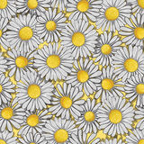 Seamless pattern of white daisy Royalty Free Stock Photos