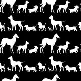 Seamless pattern with white dogs silhouettes - Dachshund, Dog, c Royalty Free Stock Image