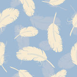 Seamless pattern with white feathers Stock Image