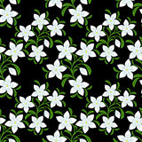 Seamless Pattern with white Flowers on black. Royalty Free Stock Images