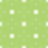 Seamless pattern with white flowers Royalty Free Stock Images