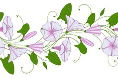 Seamless pattern of white and pink convolvulus. Garland with bindweed flowers. Morning-glory tender ornament. Vector floral endless border Royalty Free Stock Images