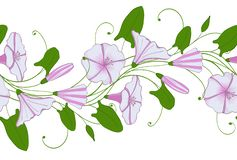 Seamless pattern of white and pink convolvulus. Garland with bindweed flowers. Morning-glory tender ornament. Floral endless border royalty free illustration