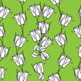 Seamless pattern with white roses on green. Vector illustration Stock Images
