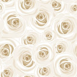 Seamless pattern with white roses. Vector illustration. Royalty Free Stock Images