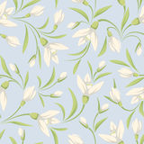 Seamless pattern with white snowdrop flowers on a blue background. Vector illustration. Royalty Free Stock Photography