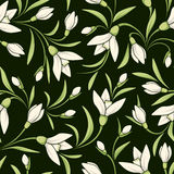 Seamless pattern with white snowdrop flowers. Vector illustration. Stock Image