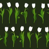 Seamless pattern of white tulips painted by hand on black background. In vertical position. royalty free illustration