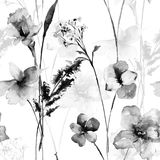 Seamless pattern with wild flowers, watercolor illustration Royalty Free Stock Image