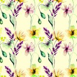 Seamless pattern with wild flowers. Watercolor illustration Royalty Free Stock Image