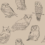 Seamless pattern with wild forest owls on beige background Royalty Free Stock Photos
