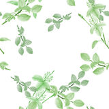 Seamless pattern of wild green flowers and branches on a white background. Watercolor Royalty Free Stock Image