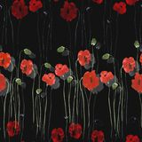 Seamless pattern of red flowers of poppies with green stems on the black background. Watercolor. Seamless pattern of wild red flowers of poppies with green stems Stock Images