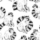 Seamless pattern with wild Ring-tailed lemur Stock Photography