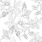 Seamless pattern of wild roses. Painted lines Royalty Free Stock Photos