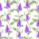 Seamless pattern wildflowers bindweed bird vetch canada pea. Vector illustration Stock Photography