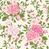 Seamless pattern wit roses. Royalty Free Stock Image