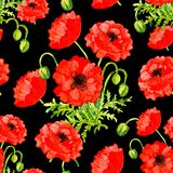 Seamless Pattern With Red Poppy Flower On Black Background Royalty Free Stock Photo