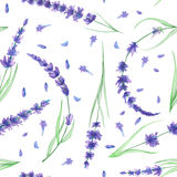 Seamless Pattern With The Watercolor Lavender Flowers Royalty Free Stock Image
