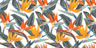 Free ,Seamless Pattern With Tropical Flowers And Leaves Of Strelitzia, Called Crane Flower Or Bird Of Paradise. Stock Images - 149153874