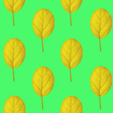 Seamless pattern of yellow leaves on a green background Stock Images