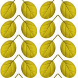 Seamless pattern of yellow leaves on a white background Stock Photography