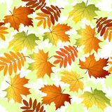Seamless pattern with yellow and red leaves Stock Photography