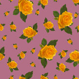 Seamless pattern yellow rose. Pink background Royalty Free Stock Images
