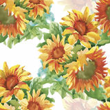 Seamless pattern with yellow sunflowers painted in watercolor on a white background Stock Image