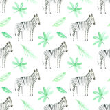 Seamless pattern with zebra and foliage. Watercolor hand drawn illustration.white background.animals image Stock Image