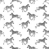 Seamless pattern with zebras Stock Images