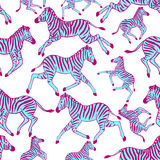 Seamless pattern with zebras Stock Image