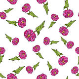 Seamless pattern with zinnia Stock Photos