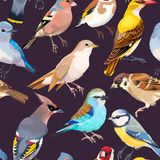 Seamless patterns with birds Royalty Free Stock Photography