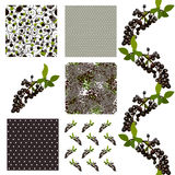 Seamless patterns set. Set of 6 elegant seamless patterns with decorative black elderberries, dots and abstract flowers, design elements vector illustration