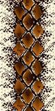 Seamless patterns snake. Vector illustration. Seamless patterns snake illustration Stock Image